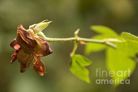 Exotic Garden 4 by Looknon Pix