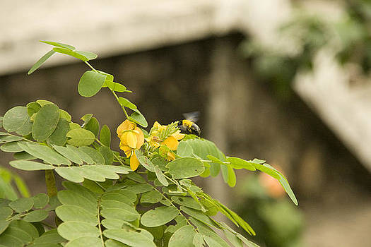 Exotic Garden 8 by Looknon Pix