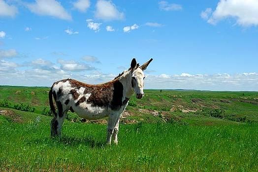 Exotic Mule in Montana by Wanda Jesfield