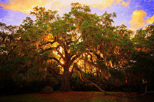 Fairchild Oak Sunrise by Andrew Armstrong  -  Mad Lab Images