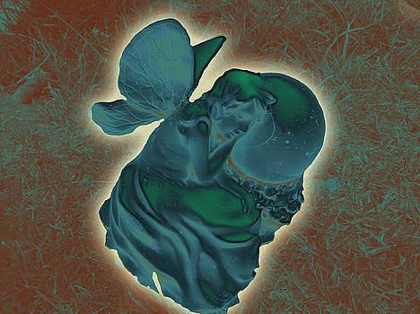 Fairy of the Night by Tasha Starr