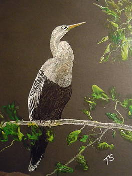 Female Anhinga by Terry Sussman