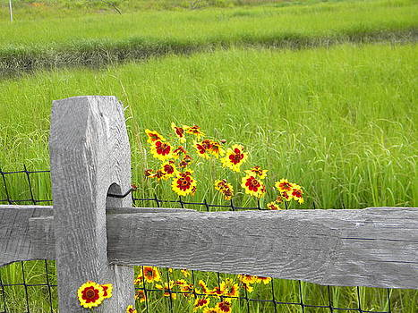 Fence by Mike Hill