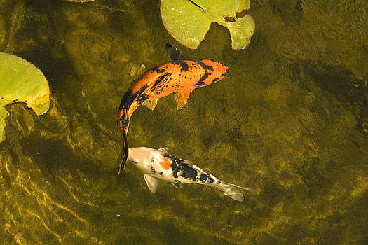 Fishes kiss by Looknon Pix