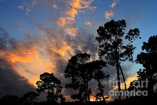 Flatwoods Sunset by Theresa Willingham