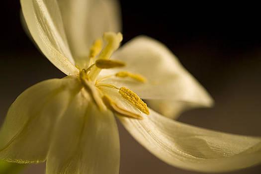 Floral Study II by Ed Bertorello