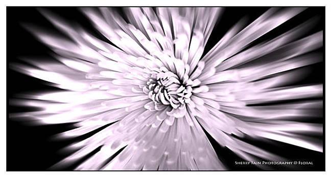 Flower Burst by Sherry Fain