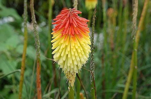 Flower Cap by Debbie Cook