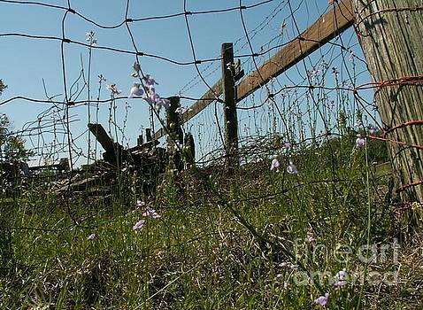Flowers and Fence by Theresa Willingham