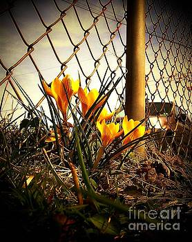 Flowers At The Fence by Victor Sexton