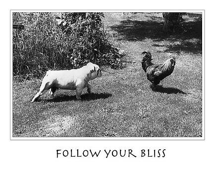 Follow your Bliss by Ellis Christopher