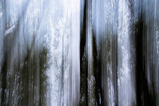 Forestry experience by Daniel Kulinski