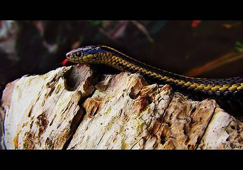 Garden Snake by Tennessee Walker