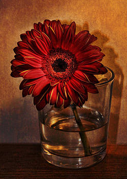 Gerbera by Julie Williams