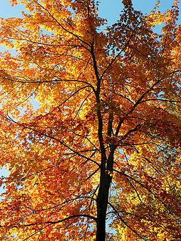 Glory Of Autumn by Jennifer Compton