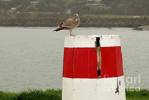 Gold Beach Gull by Rose Jones