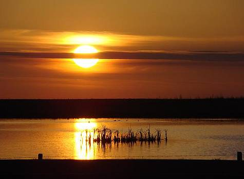 Golden Sunrise by Sandi Owens