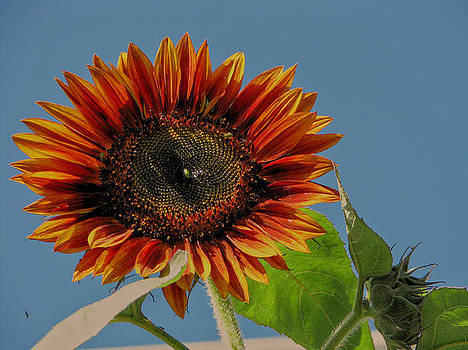 Goodmorning Sunshine by Victoria Sheldon