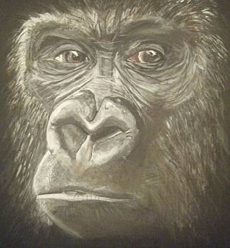 Gorilla by Catherine Eager