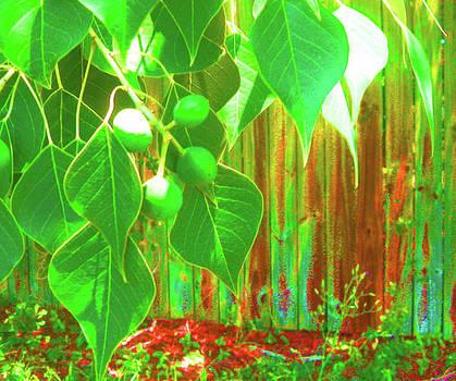 Green Curtain by Juliana  Blessington