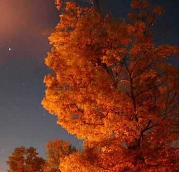 Green Tree At Night by Devon Stewart
