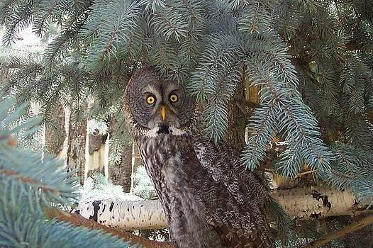 Grey Owl by Keith Rohmann