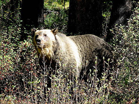 Grizzly by Keith Rohmann