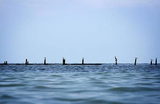 Gulls in a Row by Shane Rees