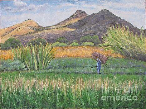 Harvesting in Yagul by Judith Zur