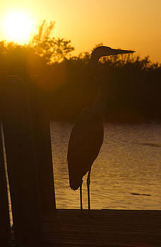 Heron Sunset by Nathan Rogers