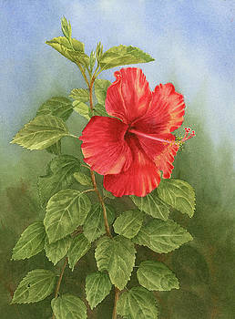 Hibiscus by Leona Jones