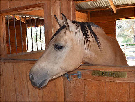 Holly in her stall by Susie Fisher