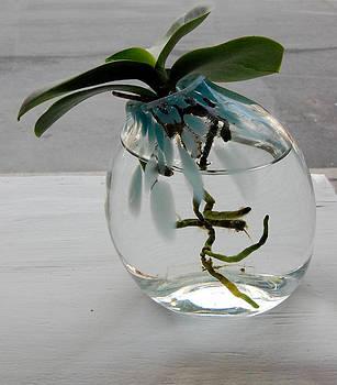 Hydro-Glass by Jessica Schimpf