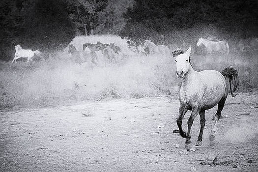 I dreamed of Wild Horses II by Ron  McGinnis