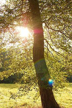 I Will Shine the Light by Jessica Wilson