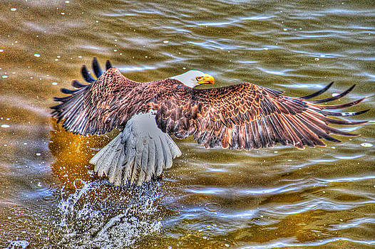 In Flight by Debbie Estensen
