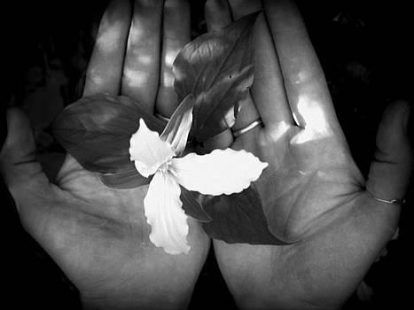 In My Hands by Devon Stewart