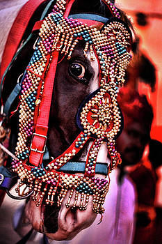 Indian Horse by Ratan Sonal