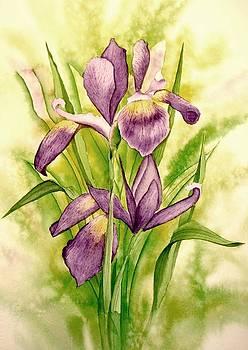 Iris by Arlene Davidson