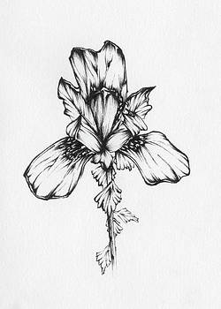 Iris by Christopher Lem