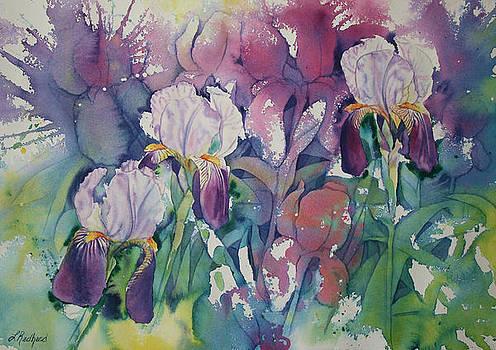 Iris Garden by Leslie Redhead