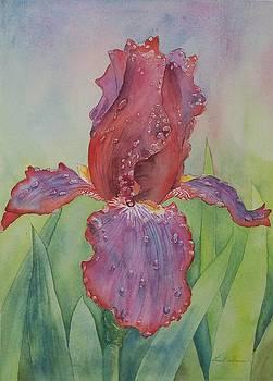 Iris by Laurel Thomson