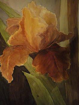 Iris by Sonia Rodriguez