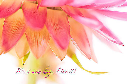 Its a new day live it by Debbie Dee