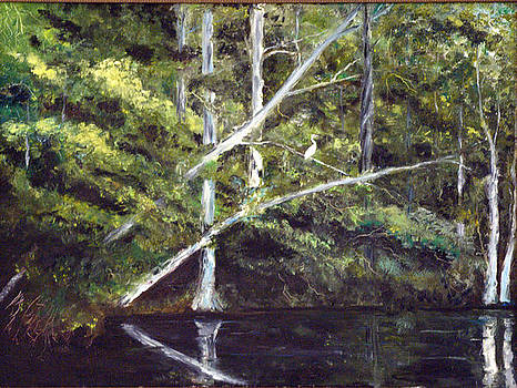 Jackson Bluff on the Waccamaw River by Phil Burton