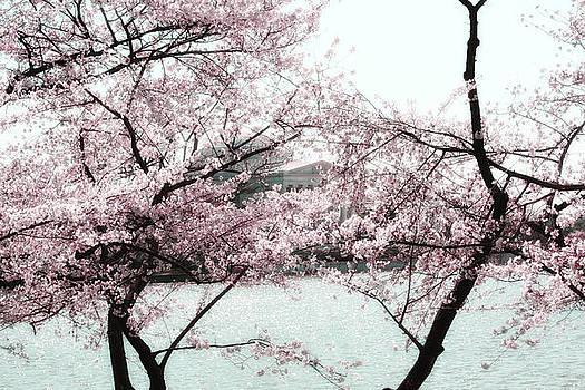 Jefferson Memorial in Cherry Blossoms by Carol Kinkead