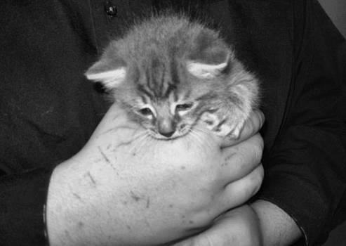Kitten Frenzy Love by Juliana  Blessington