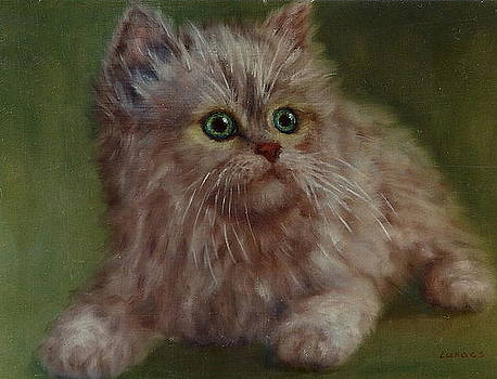 Kitten with green colours by Erika Lukacs