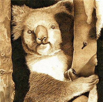 Koala in Tree by Cate McCauley