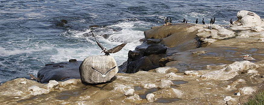 La Jolla Cove California by Jan Cipolla